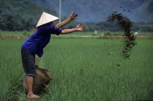 56408177.Vietnam_05.jpg