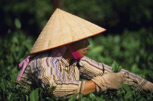 56408243.Vietnam_50.jpg